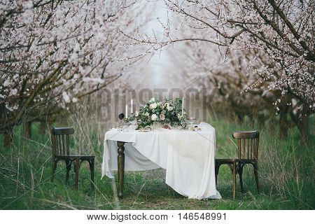 Decorated ceremonial table in the Victorian style in apricot garden. A wedding in spring garden. The effect of film photography