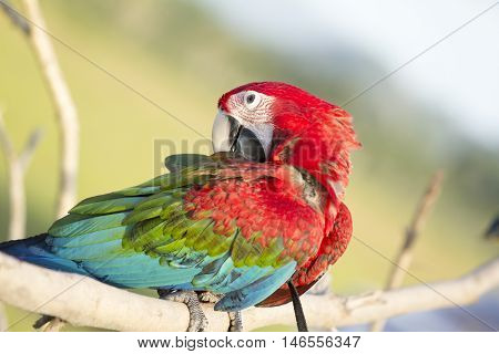 Face of Parrot on nature background in the evening.