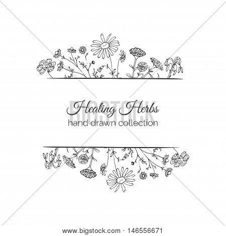 Holistic Medicine. Healing Herbs Illustration. Handdrawn Aloe vera, Arnica, Calendula, Chamomile and Coriander. Health and Nature collection. Vector Ayurvedic Herb. Herbal Natural Supplements.