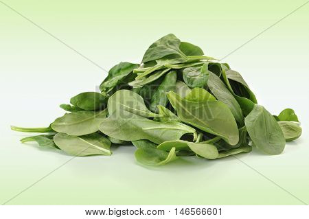 Baby spinach studio isolated on white-green  background