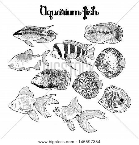 Graphic aquarium fish isolated on white background. Fresh water creatures. Coloring book page design for adults and kids