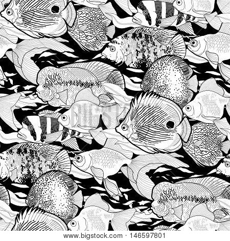 Graphic aquarium fish. Fresh water creatures. Vector seamless pattern. Coloring book page design for adults and kids