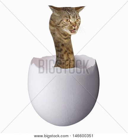 A cat looks like a big hairy snake. This is cub in a egg. White background.