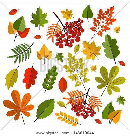 Collection beautiful colorful autumn leaves isolated on white background. Color maple bright season red and orange autumn leaves. Nature fall yellow leaf autumn leaves seasonal forest symbols.