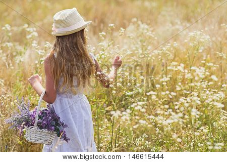 Pretty girl is picking flowers on field. She is walking and carrying basket. Focus on her back