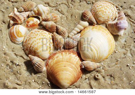Heart shape made of shells at beach
