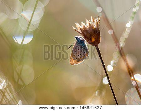 Blue Butterfly Silhouette