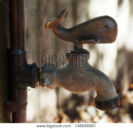 Cute great whale garden metal tap (Moby Dick)