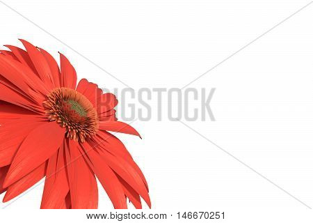 3D rendering of red gerbera daisy isolated on white