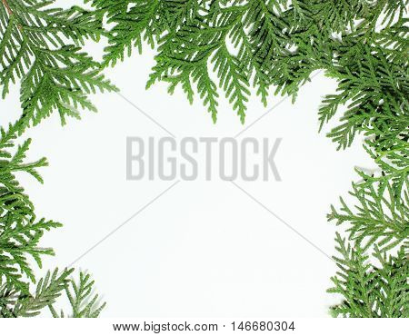 ever green fir tree decoration for christmas card isolated, new year pattern, copyspace on white close up
