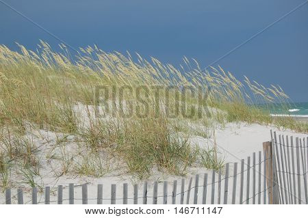 A view of a sand dune with sea oats blowing in the wind with a small view of a beautiful beach in the background.