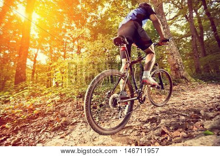 biking - rear wheel of a mountain bike