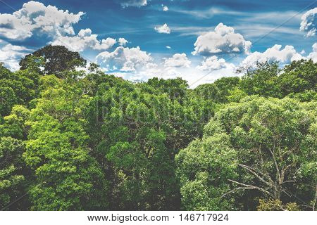 Aerial view of the Amazon rainforest in Brazil