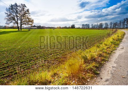 autumnal landscape South Bohemia Czech Republic - lonely tree in the field
