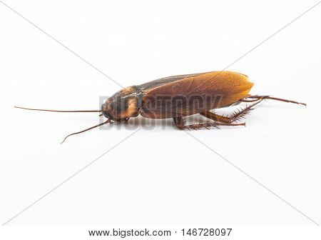 Dead cockroaches in an apartment house on the background of the water faucet. Inside high-rise buildings. Fight with cockroaches in the apartment. Extermination.