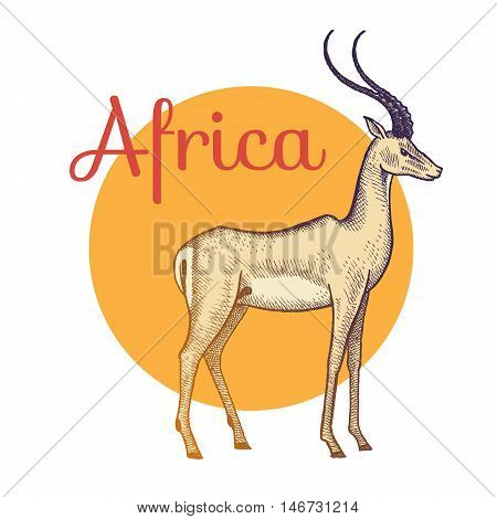 African animals. Antelope. Illustration Vector Art. Style Vintage engraving. Hand drawing.