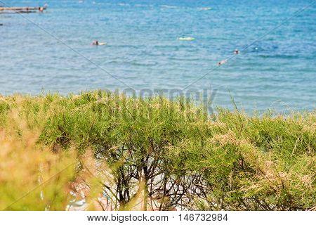 Green bushes and blue sea behind in Istria, Croatian coast