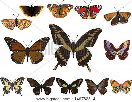 illustration with thirteen butterflies isolated on white background