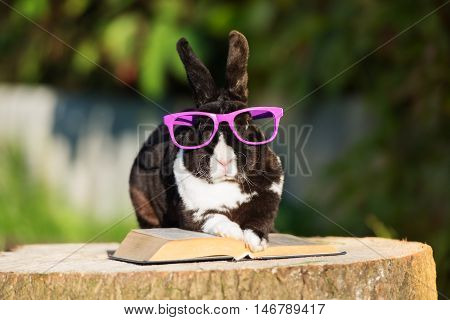 adorable rabbit in glasses reading a book