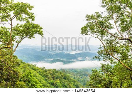 Green rain forest on mountian with mist and low cloud in morning. Umpang Thailand.