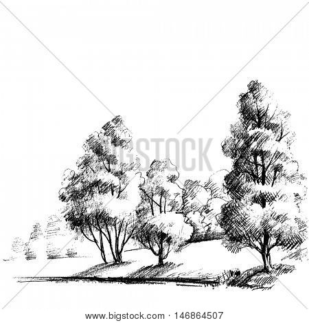 Forest sketch. Beautiful garden hand drawing, artistic nature background