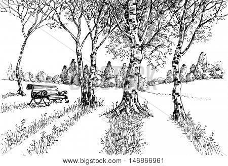 Garden in the sunlight drawing. A bench in the park