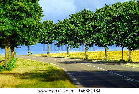 Automobile Asphalt Road Perspective View, Rural Place