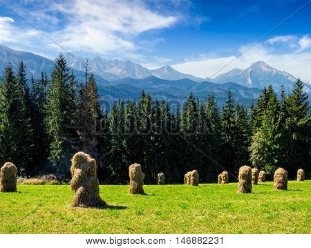 haystack near spruce forest on a meadow in Zakopane of Poland side of Tatra mountains