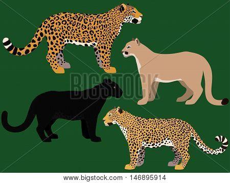 Cartoon big cats vector set. Illustration of black panther cougar jaguar leopard.