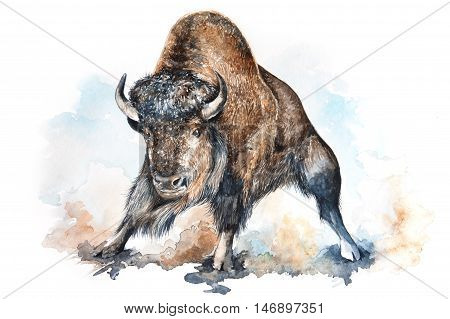 Watercolor illustration of an angry bison surrounded by dust clouds