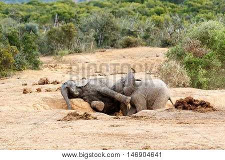 Were Playing Smile Were On Camara - African Bush Elephant Family