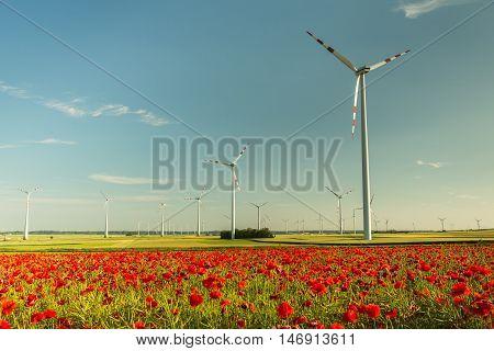 field of wild poppy flowers behind wind turbines farm