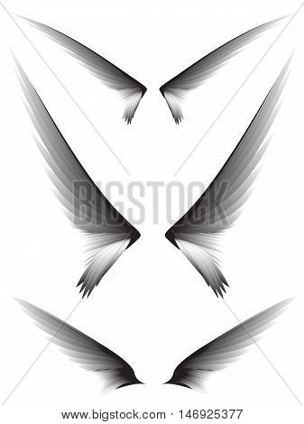 Set gray wings on white background design element