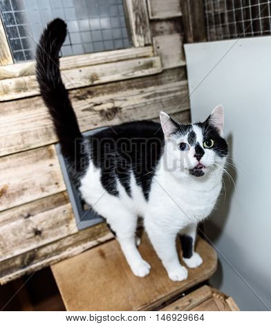 Homeless Cat Needs A Forever Home