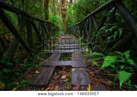 PASTO, COLOMBIA - JULY 3, 2016: small path with some wood steps on the ground on the middle of the jungle.