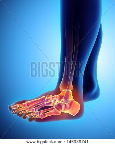 3D Illustration Of Foot Skeleton, Medical Concept.