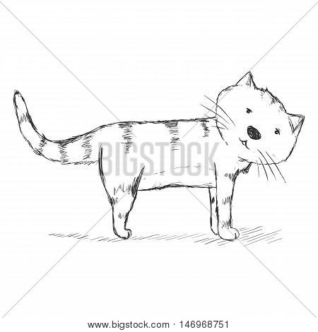 Vector Sketch Character - Funny Cat