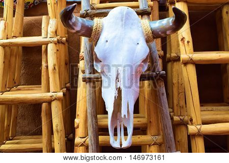 Cow bull skull placed on a latter as decoration taken in the Desert Southwest, USA