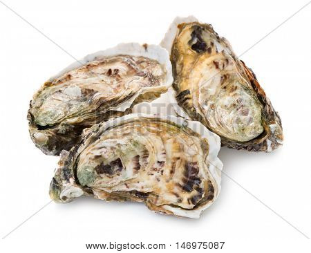 Fresh oysters on white background