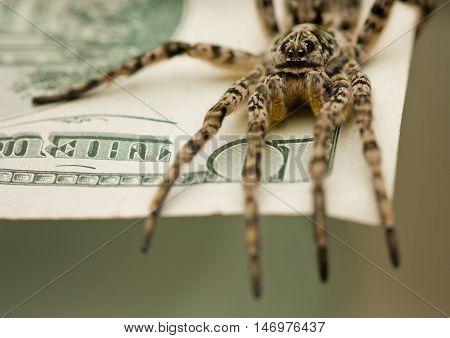 Macro of tarantula standing on dollar bank notes savings protection concept
