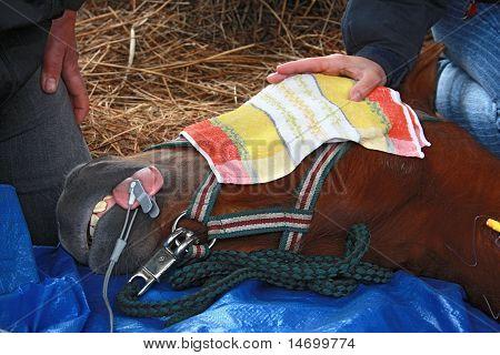 horse operation