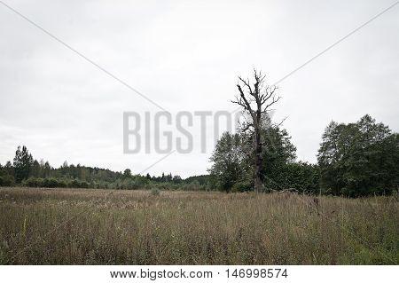 tree is struck by lightning in the field