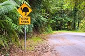 A cassowary road warning sign in the rainforest of north Queensland Australia poster