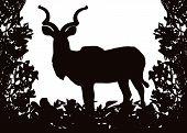 Kudu (Koedoe) in Isolated bush or jungle frame Vector (EPS) poster