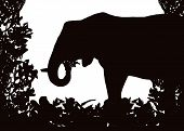 Elephant in Isolated bush or jungle frame Vector (EPS) poster