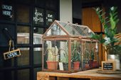 film warm tone effected photo with blurred edge effect from petzval lens of cute cactus terrarium planting in little antique glass house with rusted for decoration poster