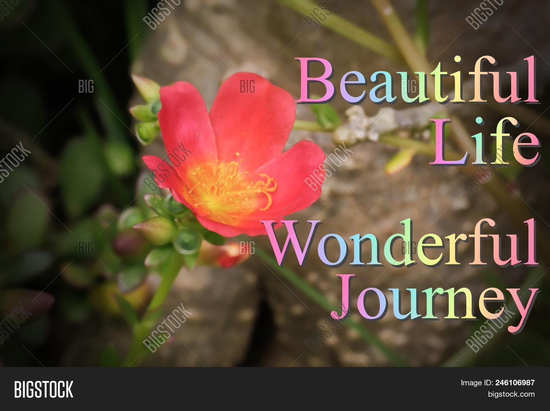 Motivational & Inspirational Quotes,beautiful Life,wonderful Journey With Nature Flower Background.