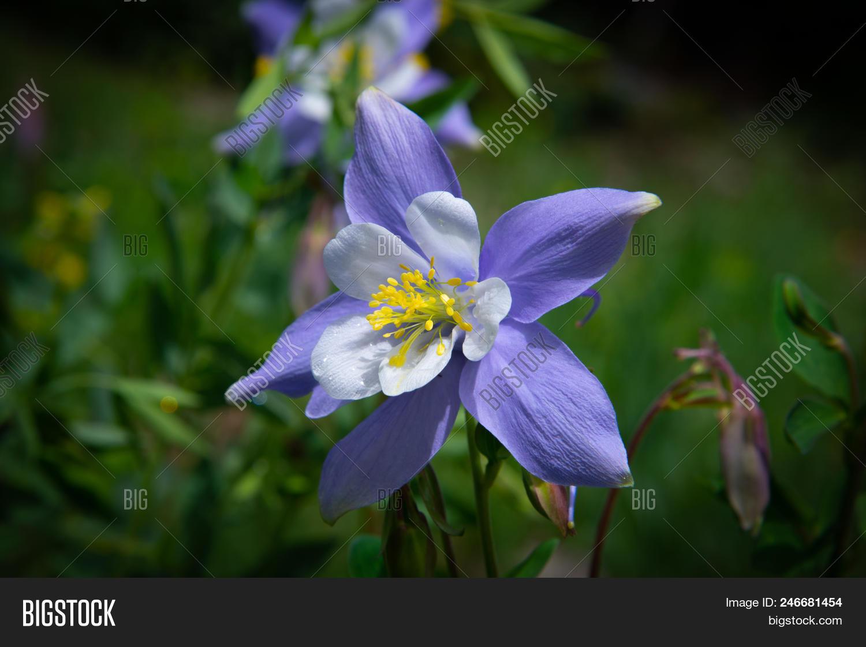 Perfect Colorado Blue Image Photo Free Trial Bigstock