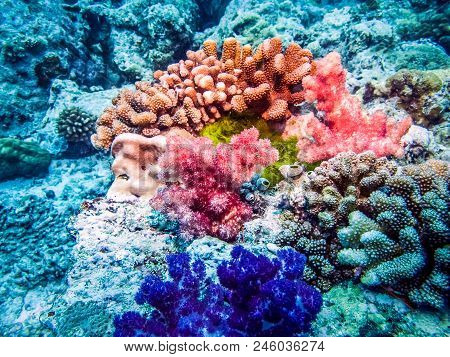 Beautiful corals and inhabitants of the sea. Marine life at coral reef and its ecosystem. Diving and exploring at Maldivian archipelago. poster