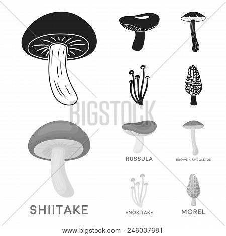 Shiitake, Brown Cap Boletus, Enokitake, Milk. Set Collection Icons In Black, Monochrome Style Vector